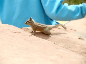 Chipmunks were all over the place. Sooooo cute
