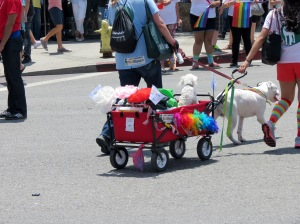 This was hilarious. Pooches in wagons.
