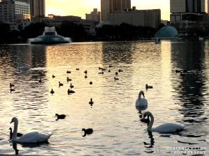 Lake in Orlando